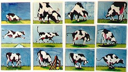 12 x 1 koe